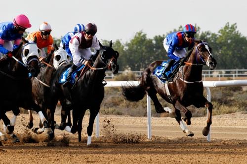 SDEA151212-horseracing01