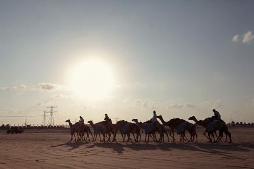 xSDEA241113-FOCALPOINT_camel02