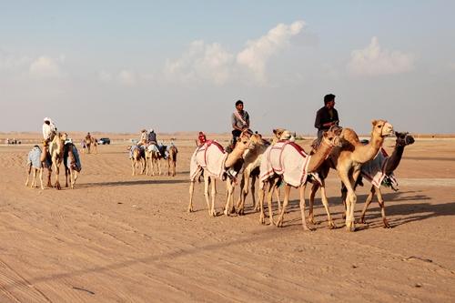 xSDEA241113-FOCALPOINT_camel04