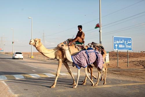 xSDEA241113-FOCALPOINT_camel05